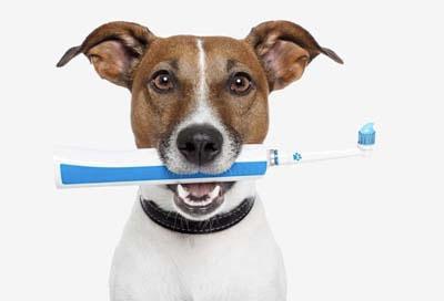 Tandbehandeling bij de dierenarts