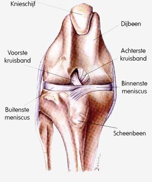 knieproblemen hond