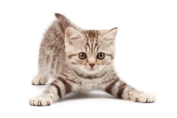 nieuwe-kat.jpg